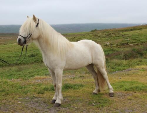 IS2009176460 – Prins from Reyðarfirði