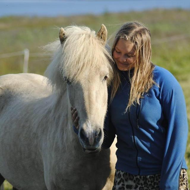 The Import Process Of An Icelandic Horse
