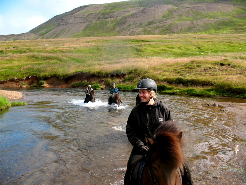 verdens smukkeste hest