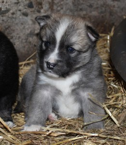 Male 3